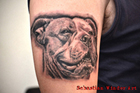 Old English Bulldog Dog Tattoo hund hunde Portrait tätowierer dortmund tattoostudio